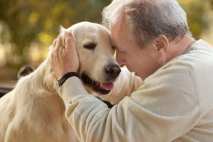 bigstock-Senior-man-and-big-dog-closeu-161496263-300x200 Tips for Keeping Your Senior's Pets Safe and Healthy During the Holidays